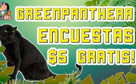 GreenPanthera Encuestas Remunerativas | Gana Dinero para Paypal